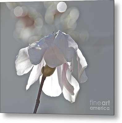 Sun Kissed Magnolia Metal Print