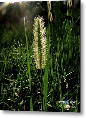 Metal Print featuring the photograph Sun-lite Grass Seed by Donna Brown