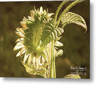 Metal Print featuring the photograph Sun-lite Sunflowwer by Donna Brown