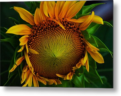 Metal Print featuring the photograph Sun Lover by John Harding