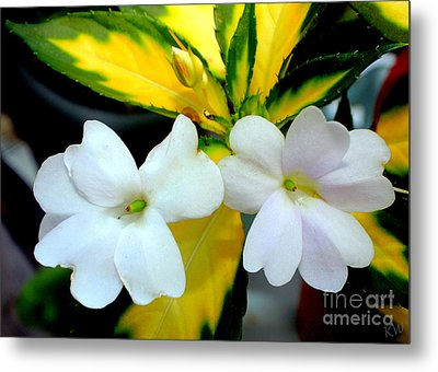 Sun Patiens Spreading White Variagated Metal Print by Kathy  White