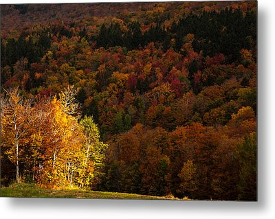 Sun Peeking Through Metal Print by Jeff Folger