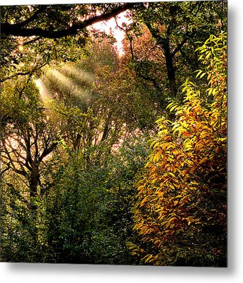 Metal Print featuring the photograph Sun Rays by Trevor Chriss