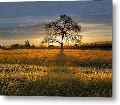 Sun Rise Oak In Yellow Mustard Metal Print