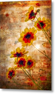 Sun Seekers Metal Print by Debra and Dave Vanderlaan