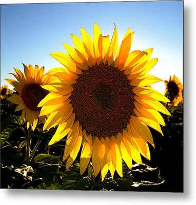 Sun Shine 3 Wc 2  Metal Print