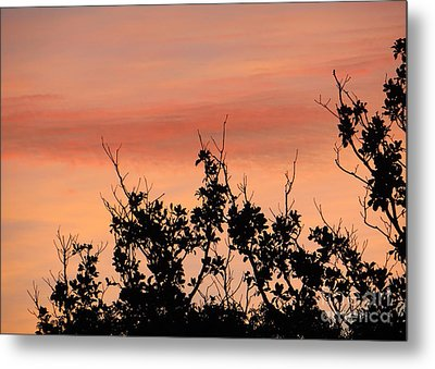 Metal Print featuring the photograph Sun Up Silhouette by Joy Hardee