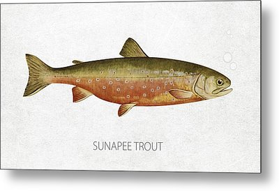 Sunapee Trout Metal Print by Aged Pixel