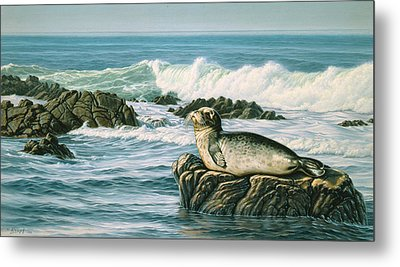 Sunbather  Metal Print by Paul Krapf