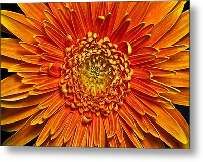 Sunburst Metal Print by Art Barker