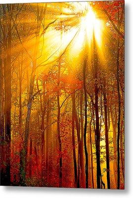 Sunburst In The Forest Metal Print