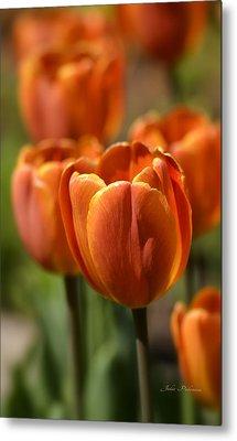 Sunburst Tulips Metal Print by Julie Palencia