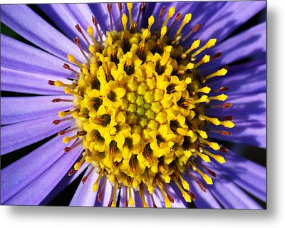 Sunburst Metal Print by Wendy Wilton