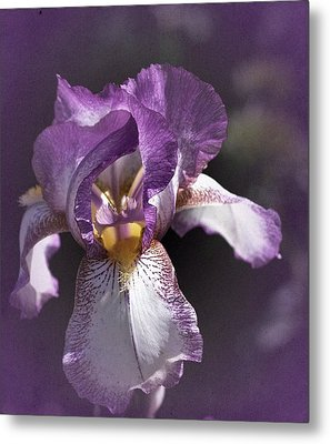 Sunday Iris No. 1 Metal Print