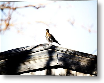 Metal Print featuring the photograph Sunday Morning  by Jessica Shelton