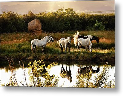 Sundown Metal Print by Elaine Manley