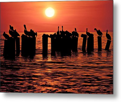 Metal Print featuring the photograph Sundown With Pelicans by Julis Simo