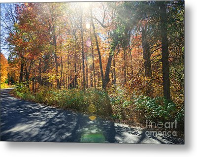 Sunflare In Fall Forest Metal Print