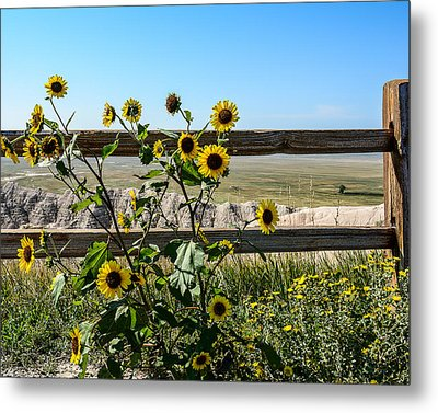 Sunflower 2 Metal Print by Robin Williams