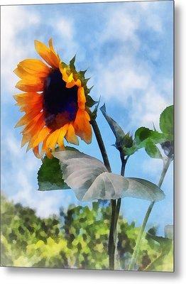 Sunflower Against The Sky Metal Print by Susan Savad