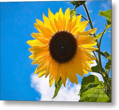 Sunflower And Bee At Work Metal Print