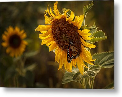 Sunflower And Butterfly Metal Print