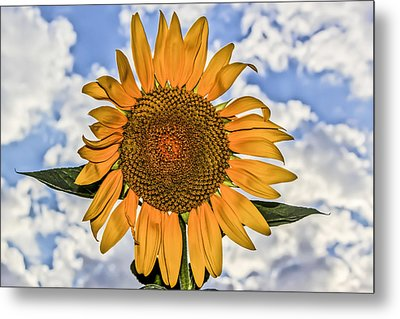 Metal Print featuring the digital art 00008 Sunflower And Clouds by Photographic Art by Russel Ray Photos