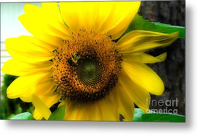 Sunflower Metal Print by Brittany Perez