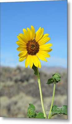 Sunflower By Craters Of The Moon Metal Print