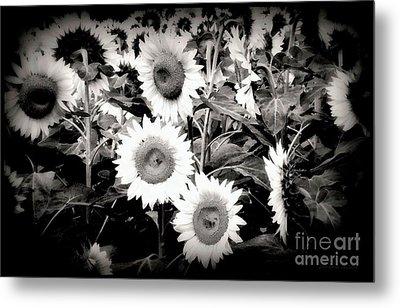 Sunflower Cinema In Black And White Metal Print