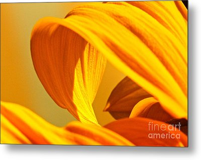 Sunflower Curve Metal Print by Michael Cinnamond