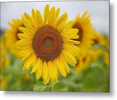 Sunflower Metal Print by Daniel Behm