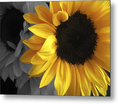 Sunflower Days Metal Print by The Forests Edge Photography - Diane Sandoval