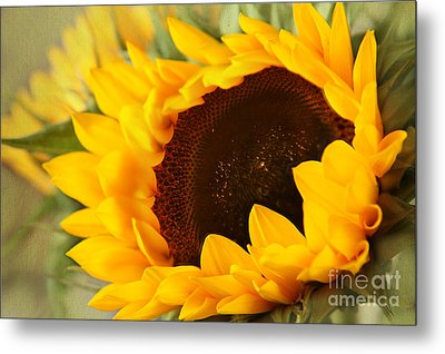 Sunflower Metal Print by Eden Baed