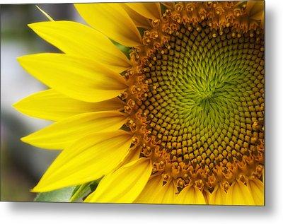 Sunflower Face Metal Print