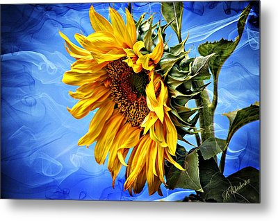 Metal Print featuring the photograph Sunflower Fantasy by Barbara Chichester