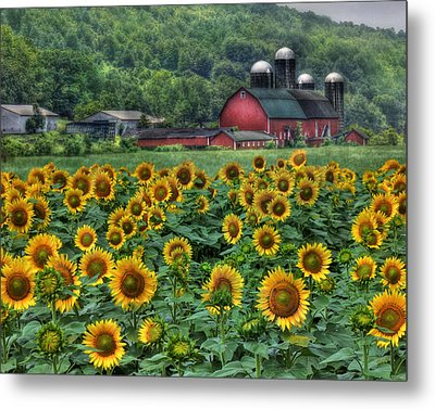 Sunflower Farm Metal Print by Lori Deiter