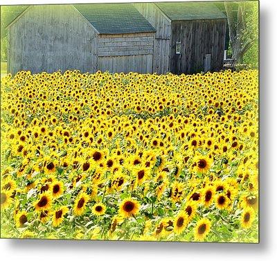 Sunflower Field Of Dreams Metal Print