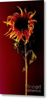Sunflower Metal Print by Fred Wilson