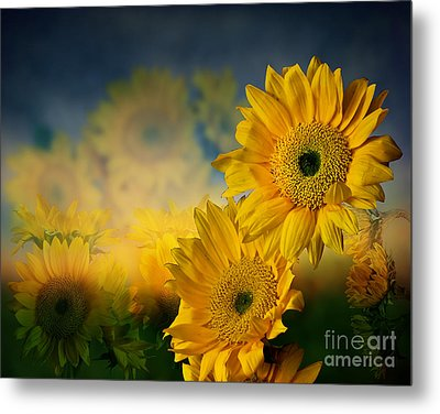 Sunflower Garden Metal Print by Shirley Mangini
