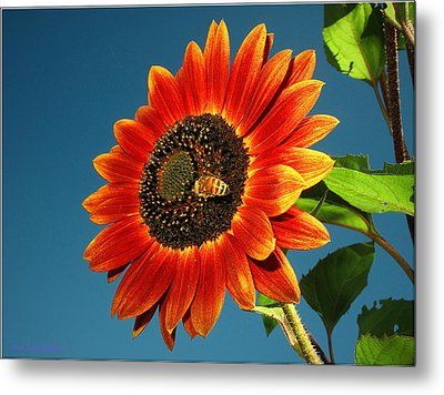 Metal Print featuring the photograph Sunflower Honey Bee by Joyce Dickens