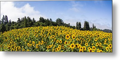 Sunflower Horizon Number 2 Metal Print