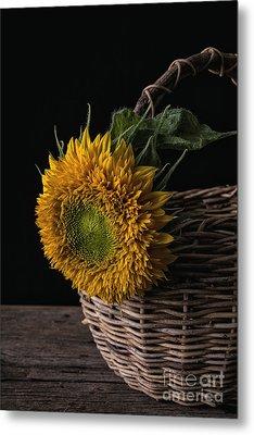 Sunflower In A Basket Metal Print by Edward Fielding