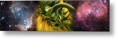 Sunflower In Cosmos Metal Print by Panoramic Images