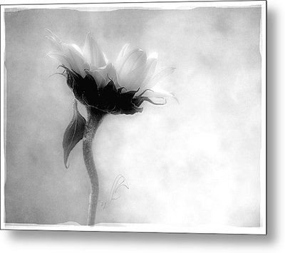 Metal Print featuring the photograph Sunflower In Profile by Louise Kumpf