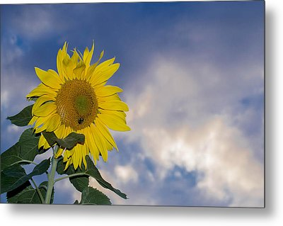Sunflower In The Sky Metal Print by Anthony Thomas