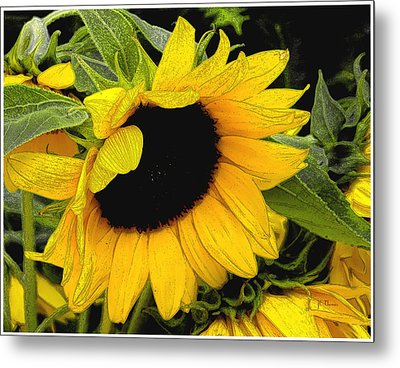 Metal Print featuring the photograph Sunflower by James C Thomas