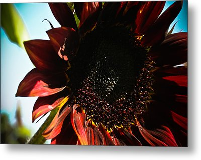 Metal Print featuring the photograph Sunflower by Joel Loftus