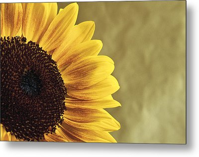 Metal Print featuring the photograph Sunflower by Lana Enderle