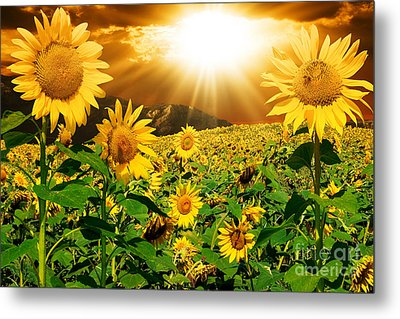 Metal Print featuring the photograph Sunflower Light Magic by Boon Mee